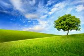 stock photo of ecology  - Scenic paradise with a single tree on top of a green hill blue sky and white clouds and another hilly meadow in the background - JPG