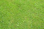 20060614 Grass 02