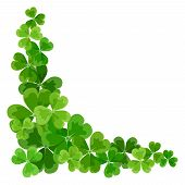 stock photo of shamrock  - Vector St - JPG