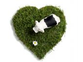 Toy Cow And Daisy Flower On Heart-shaped Lawn