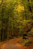 Veering Road In Autumn Forest