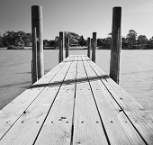 Murray River Jetty Black And White