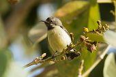 Young Beautiful Sunbird On A Perch