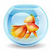 Vector Illustration Of A Goldfish In An Aquarium
