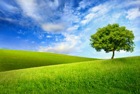 image of greenery  - Scenic paradise with a single tree on top of a green hill blue sky and white clouds and another hilly meadow in the background - JPG