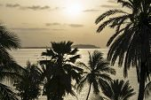 Tropical sunrise - Silhouettes of coconut palm trees facing the sea