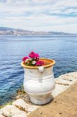 picture of hydra  - Colourful pink and white flowers in white clay pot overlooking the Saronic Gulf in Hydra island in the Aegean Sea Greece - JPG