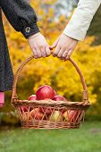 Female Couple With Basket With Apples