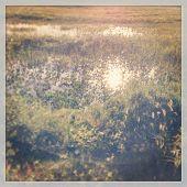 Water in Grassy field - Instagram effect