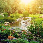 Spring flowers against sun in the Asian garden with a pond with lens flare, instagram effect