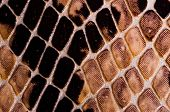 stock photo of lizard skin  - Artificial Reptil Snake Skin Seamless Pattern Texture - JPG