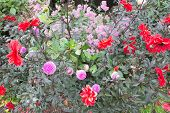Flower Bed In Red And Pink