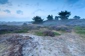 Misty Dusk On Sand Dunes With Heather