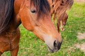 Horse On The Farm