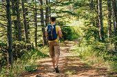 Traveler Man In Forest