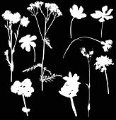 illustration with wild flowers silhouettes isolated on black