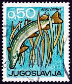 Postage Stamp Yugoslavia 1967 Northern Pike, Bird