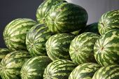 Striped watermelons