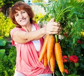 Woman grows harvest in the garden. Senior with carrot