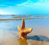Sand Fish Landscape