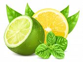 Fresh lime and lemon with leaves and mint. Vector illustration.