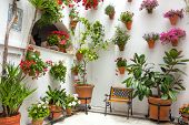 Spring Flowers Decoration of Old House, Spain, Cordoba Patio Fest, Europe