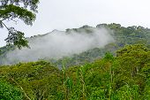 Cloud Forests In The Mountains
