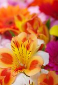 Background of the beautiful flowers
