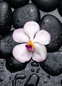 beautiful orchid with wet stones on wet background