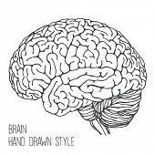Brain - hand drawn style