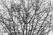 Tree Black And White