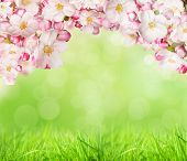 Spring blossoms with green grass background. Free space for text