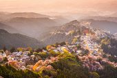 Yoshinoyama, Nara, Japan view of town and cherry trees during the spring season.