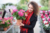 Beautiful woman holding flower pot with red hydrangea in the greenhouse