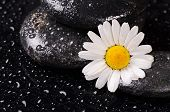 Stones For Spa With Water Drops And Chamomile