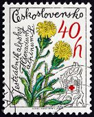 Postage Stamp Czechoslovakia 1979 Hawkweed, Mountain Flower