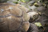 picture of turtle shell  - Close up to big turtle