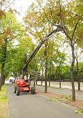 cleaning trees
