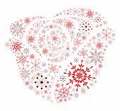 Snow Flake Rose
