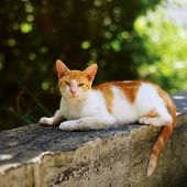 Outdoor photo of a cat