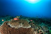 Colorful tropical coral reef