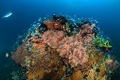 Colourful Glassfish Pinnacles