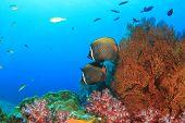 Beautiful coral reef with tropical fish underwater in ocean