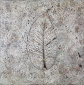 Leaves On Cement