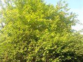 Dense foliage of tree