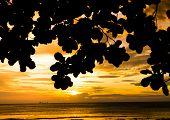 Golden View Calm Meditation