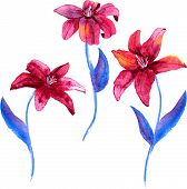 Set of watercolor drawing lily flowers