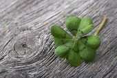 Four leaf clover on grey wooden background