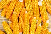 Orange Dried Corn Background For Animal Feeding