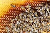 picture of bee-hive  - many bees are working in a bee hive - JPG
